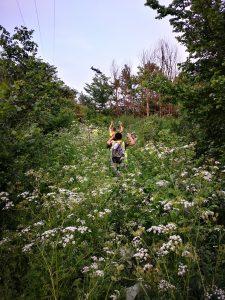 Overgrown path.